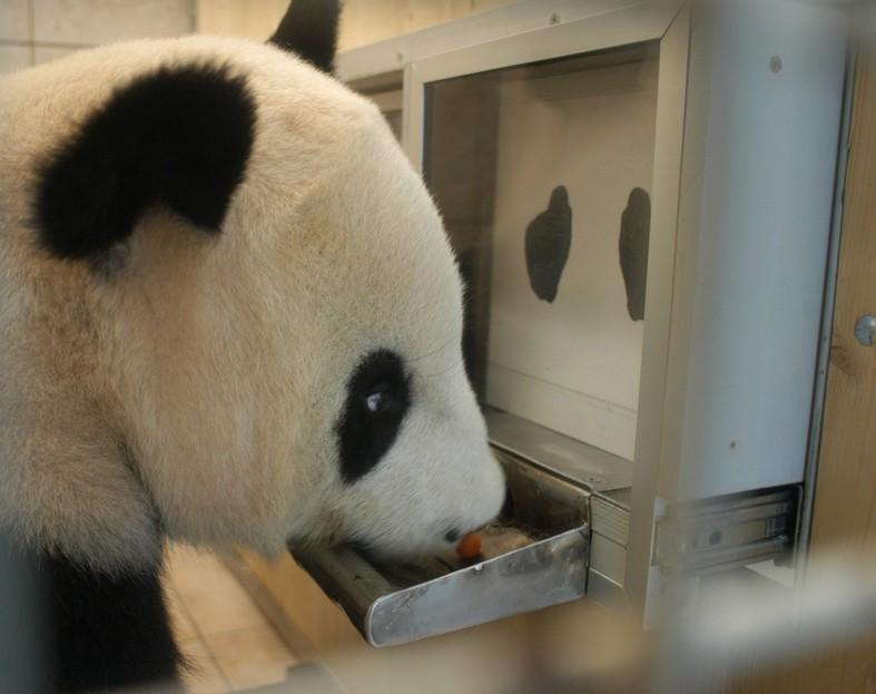 Panda Augen Kinder
