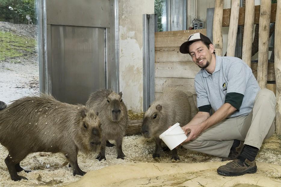 Ausbildung Zum Tierpfleger Tiergarten Schonbrunn